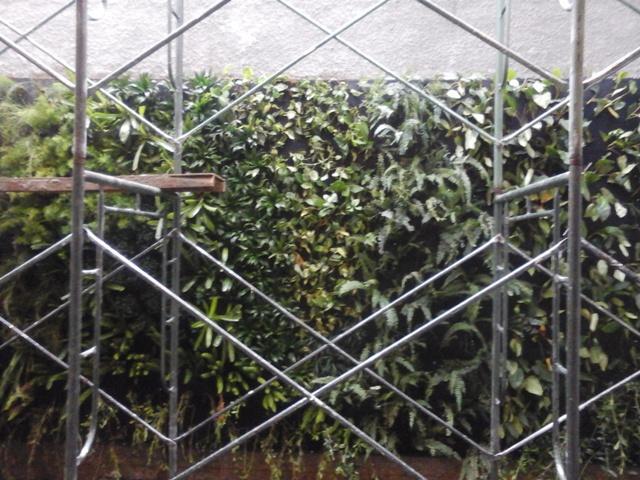 Foto: Vertical Garden Harga Murah