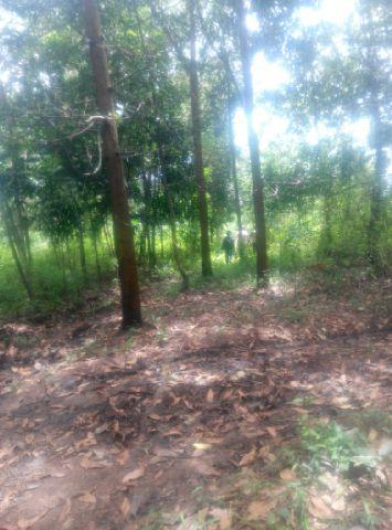 Foto: Di Jual Tanah 100 Ha, Sukabumi Murah